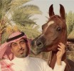 Our stunning homebred mare PRECIOSO NAJIMAH is on her way to the Kingdom of Saudi Arabia