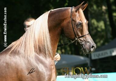 El Precioso Arabians Stud WLC